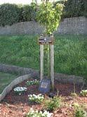 Halabja Memorial Tree, Portsmouth UK
