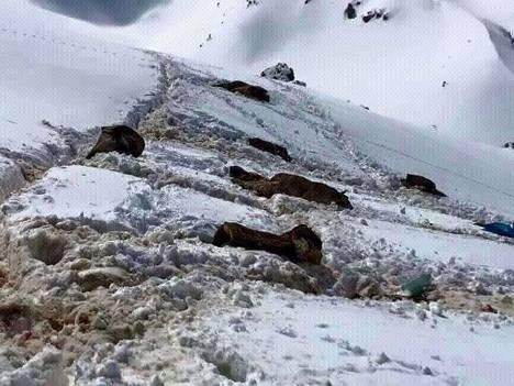 10 Roboski mules massacred, March 23, 2015