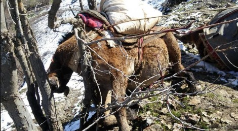 03 20150323 dead mule by ferhatencu
