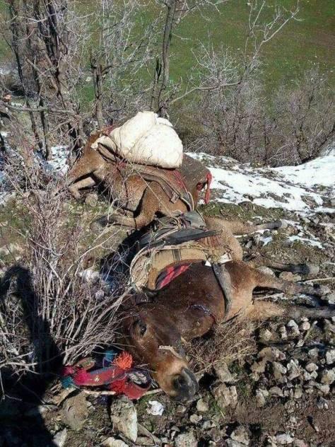04 roboski dead mules