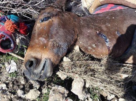 05 20150323 mule face bullet hole