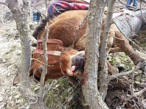 10 mule head in tree