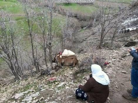 Woman grieves death of her mule.