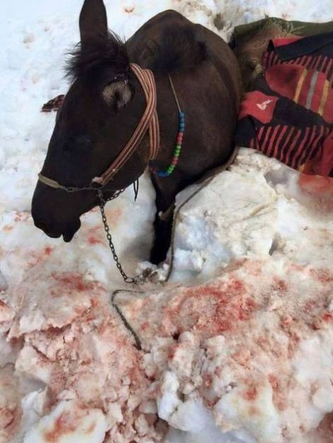 2 injured horses died a slow death.